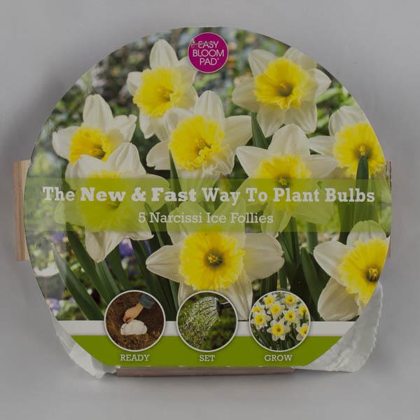 Ice Follies Daffodil Easy Bloom Pad