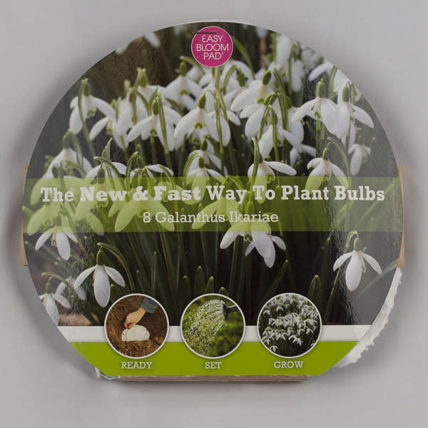 Snowdrop Easy Bloom Pad