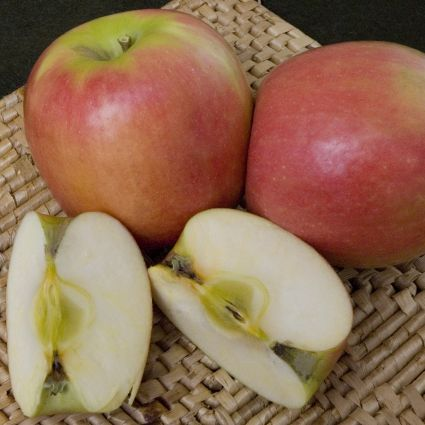Pink Lady Apple Tree - Cripps Pink Variety -