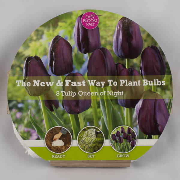 Queen of the Night Tulip Easy Bloom Pad