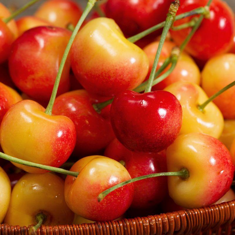 Rainier Cherry Tree Naturehills Com