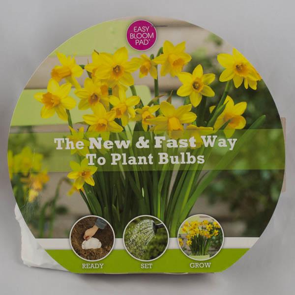 Tete-a-Tete Daffodil Easy Bloom Pad