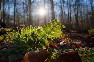 Fern in the winter