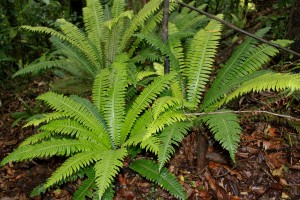 Multiple Ferns