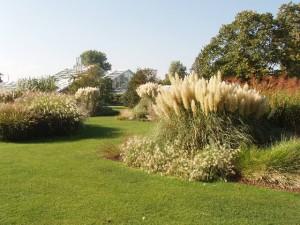 Ornamental grass care workwithnaturefo