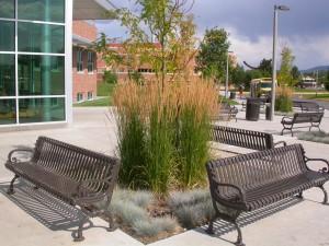 Ornamental grass care planting ornamental grasses workwithnaturefo