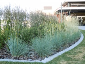 Ornamental grass care workwithnaturefo