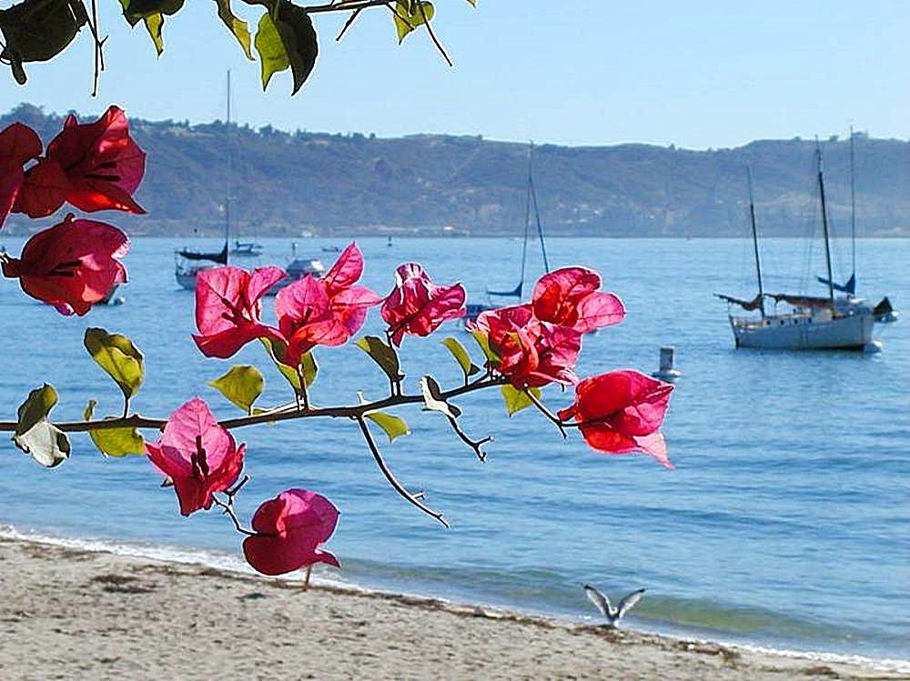 Ocean_flowers_water_boats_beaches