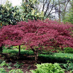 Our Favorite Trees For The Front Yard And Backyard Naturehills Com