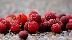 bayberry berries