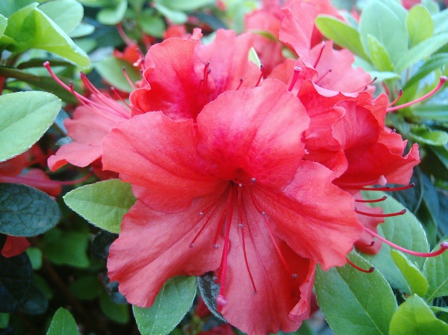 Hot Shot Girard Azalea