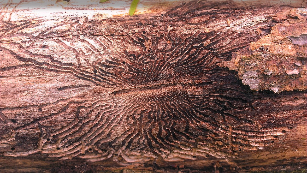 Damage Caused By Emerald Ash Borers