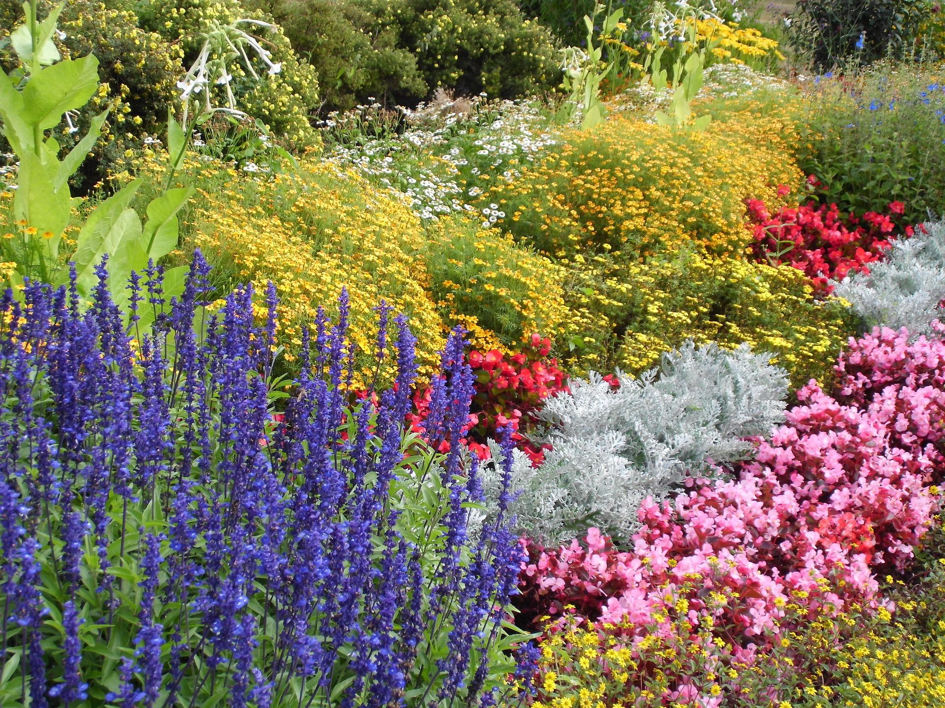 8 Plants That Rebloom For 3 Seasons Of Flowers