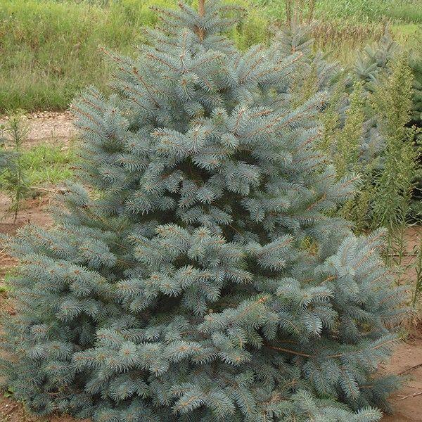How to Keep Your Christmas Tree Fresh