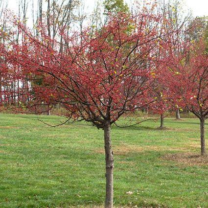 Nature Hills Nursery America S Largest Online Plant Nursery