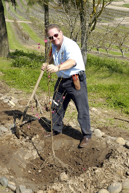 Planting a Tree is Just Not Digging a Hole: Simple tips for planting a fruit tree