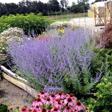 Perennials For Sale Online Wisteria Hosta Nature Hills Nursery