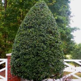 Buy Trees For Sale Online | Nature Hills Nursery
