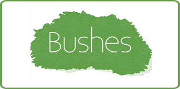 Shop Our Wide Selection of Bushes and Shurbs