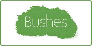 Nature Hills Nursery Americas Largest Online Plant Nursery