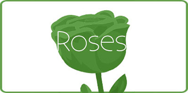 Shop Our Wide Selection of Roses