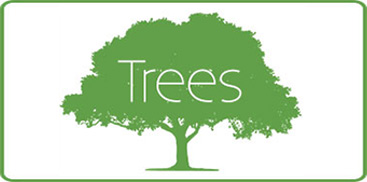 Shop Our Wide Selection of Trees
